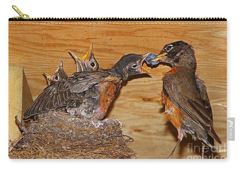 Birds Carry-all Pouch featuring the photograph Baby Robins Feeding An5141-14 by Randy Harris