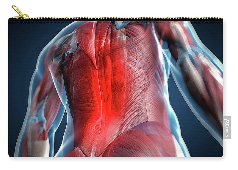 Physiology Carry-all Pouch featuring the digital art Back Pain, Conceptual Artwork by Science Photo Library - Sciepro