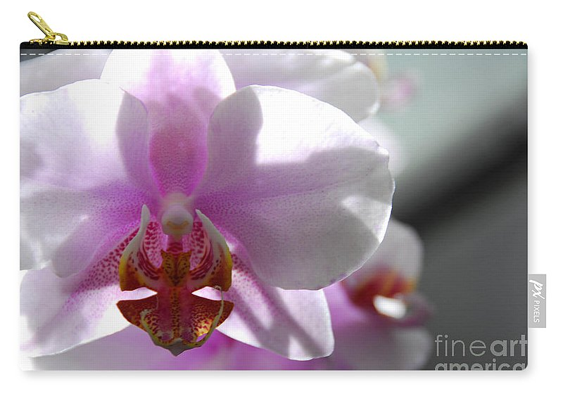 Orchid Carry-all Pouch featuring the photograph Backlit Orchid by Cindy Manero