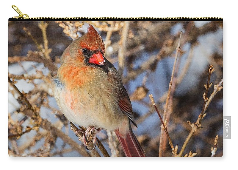 Cardinal Carry-all Pouch featuring the photograph Backyard Birds Female Nothern Cardinal Square by Bill Wakeley
