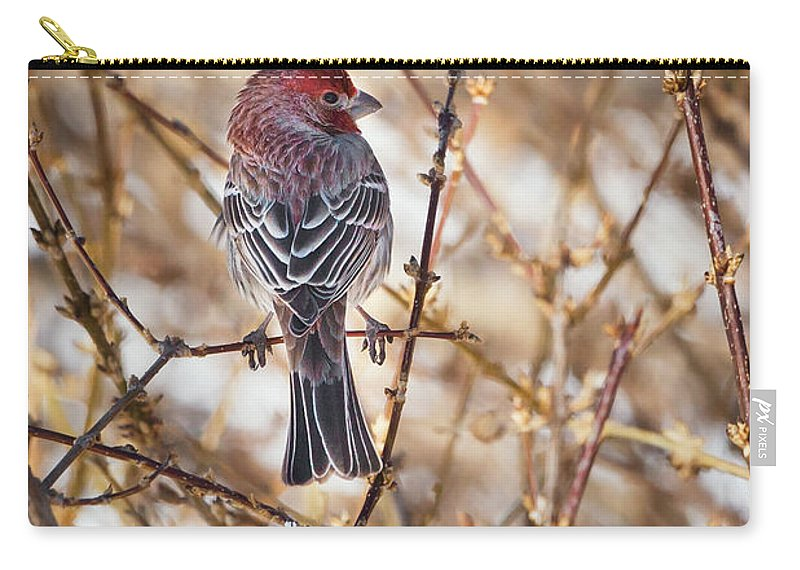 Finch Carry-all Pouch featuring the photograph Backyard Birds Male House Finch by Bill Wakeley
