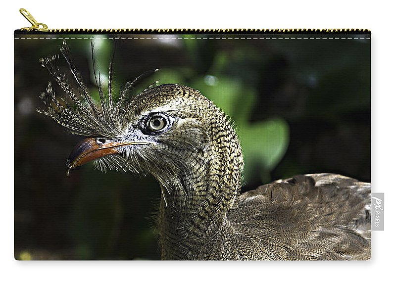 Birds Carry-all Pouch featuring the photograph Bad Feather Day by Ken Frischkorn