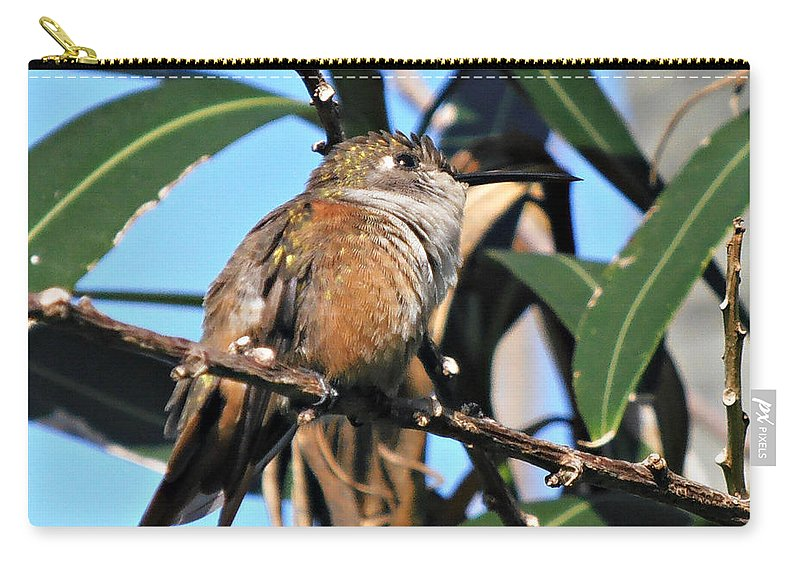 Hummingbird Carry-all Pouch featuring the photograph Bahama Woodstar Hummingbird by Kimberly Perry