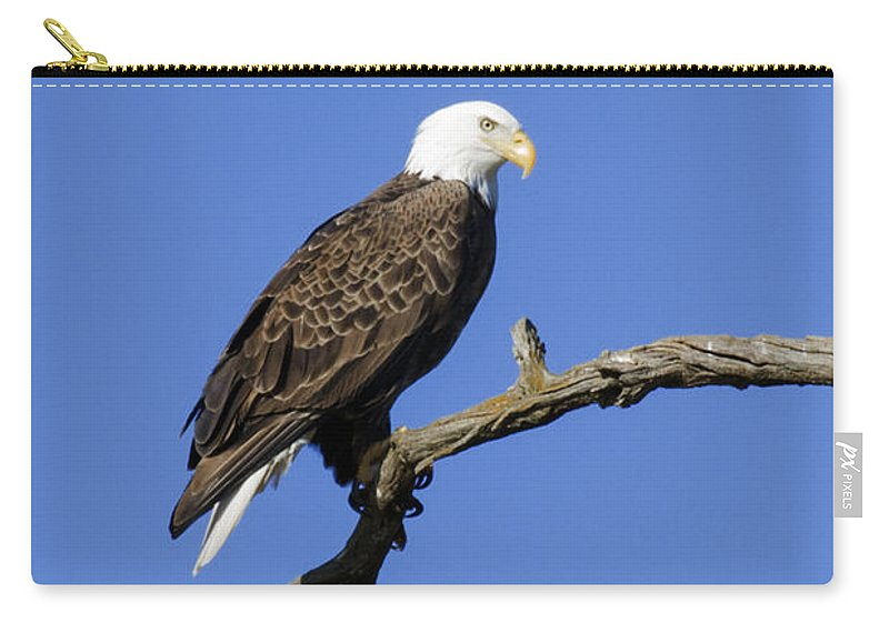 Eagle Carry-all Pouch featuring the photograph Bald Eagle 4 by David Lester