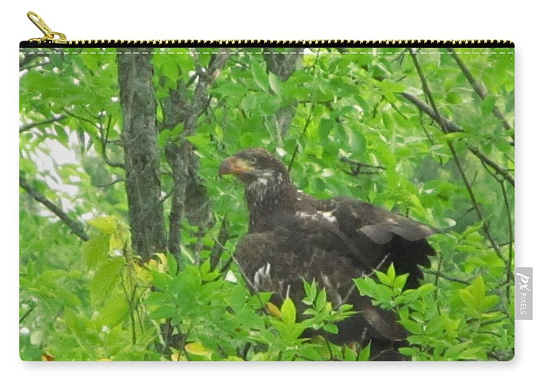 Bald Eagle Carry-all Pouch featuring the photograph Bald Eagle In A Tree by Robert Nacke