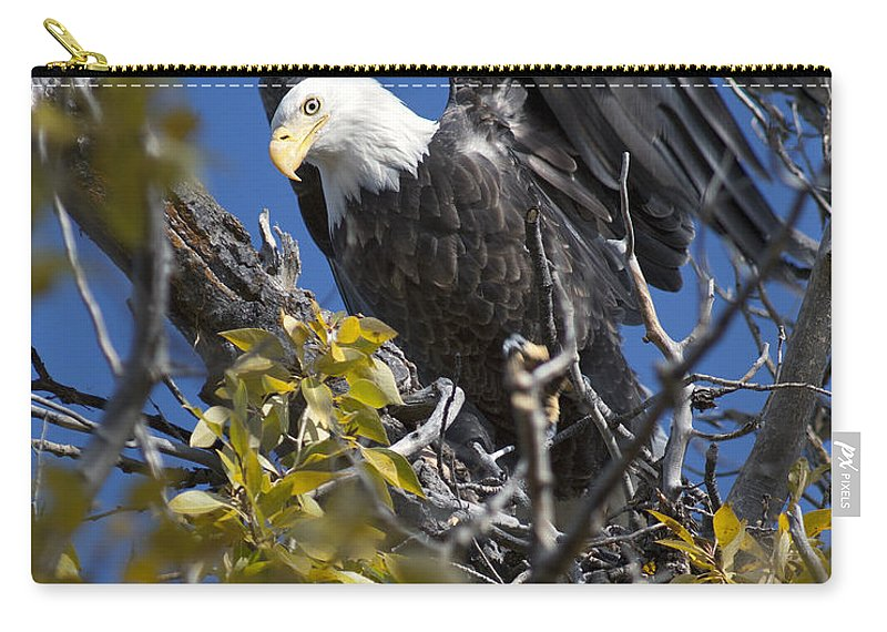 Bald Eagle Carry-all Pouch featuring the photograph Bald Eagle On Nest Near The Oxbow by Gary Langley