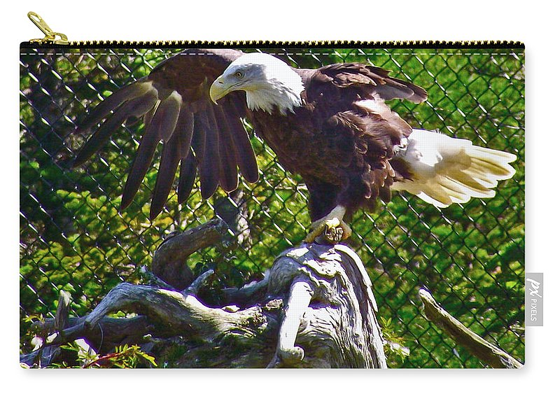 Bald Eagle With A Broken Wing In Salmonier Nature Park Carry-all Pouch featuring the photograph Bald Eagle With A Broken Wing In Salmonier Nature Park-nl by Ruth Hager