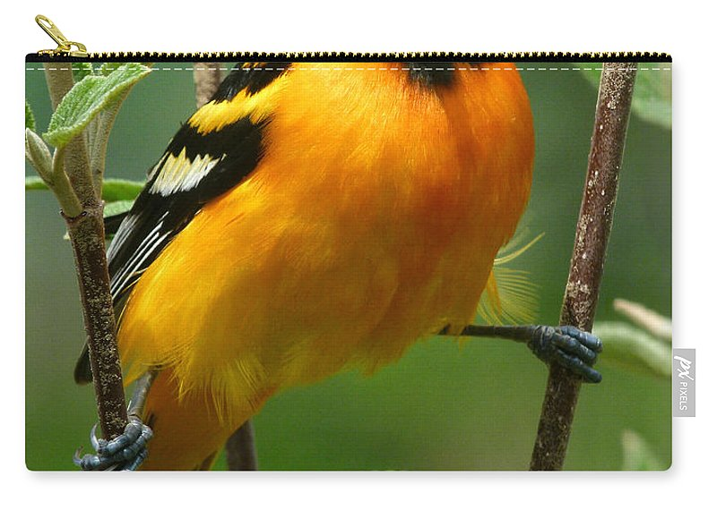 Oriole Carry-all Pouch featuring the photograph Baltimore Oriole by Bruce Morrison