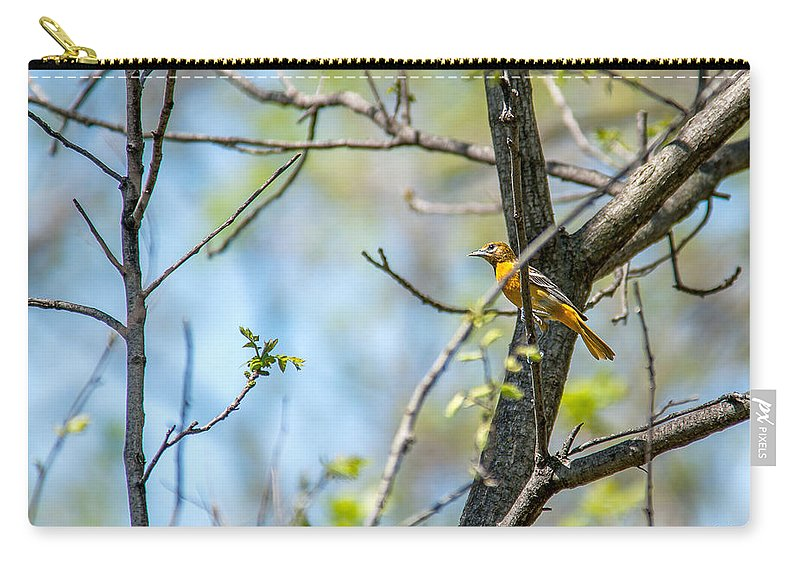 Heron Heaven Carry-all Pouch featuring the photograph Baltimore Oriole by Edward Peterson