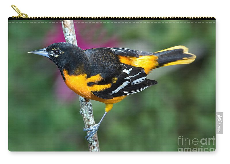 Animal Carry-all Pouch featuring the photograph Baltimore Oriole Icterus Galbula by Anthony Mercieca