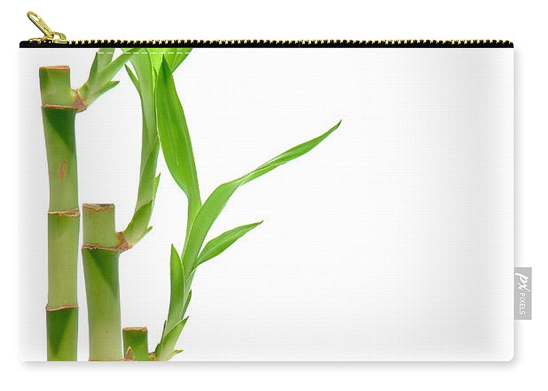 Bamboo Carry-all Pouch featuring the photograph Bamboo Stems In Black Vase by Olivier Le Queinec