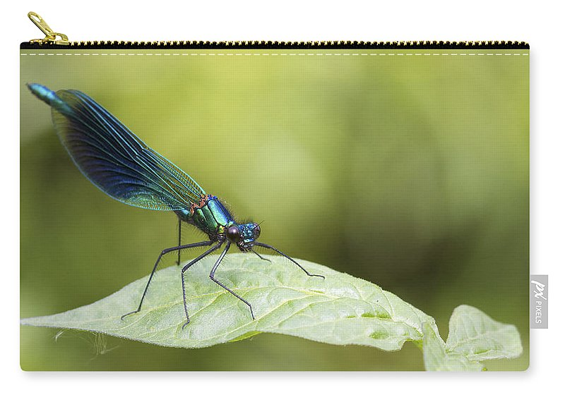 Banded Demoiselle Carry-all Pouch featuring the photograph Banded Demoiselle by Chris Smith