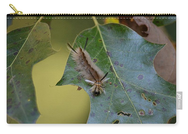 Banded Tussock Moth Caterpillar Carry-all Pouch featuring the photograph Banded Tussock Moth Caterpillar by Maria Urso