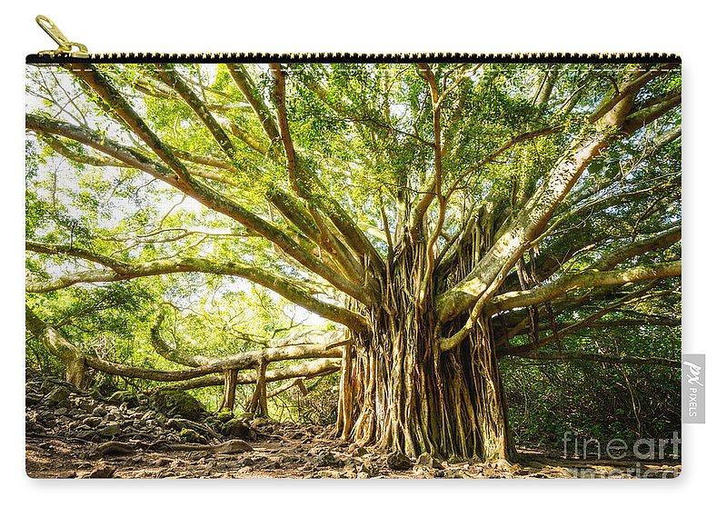 Large Carry-all Pouch featuring the photograph Tree Of Life by Jamie Pham