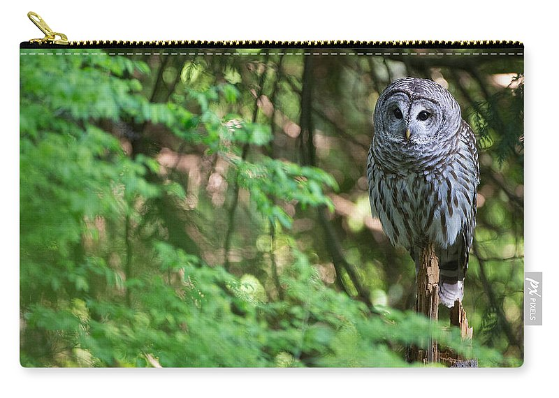 Barred Owl Carry-all Pouch featuring the photograph Barred Owl In Forest by Max Waugh