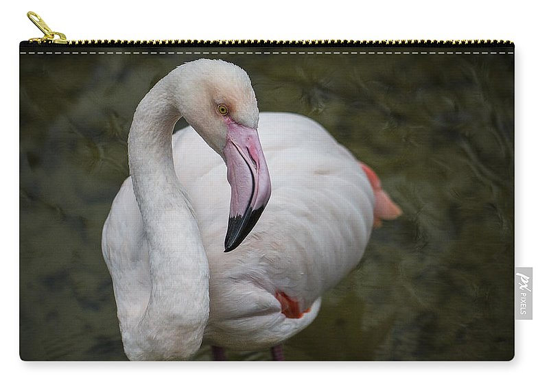 Clare Bambers Carry-all Pouch featuring the photograph Bashful And Shy Flamingo. by Clare Bambers