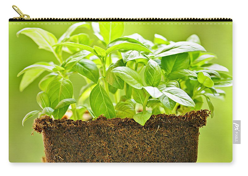 Basil Carry-all Pouch featuring the photograph Basil by Elena Elisseeva
