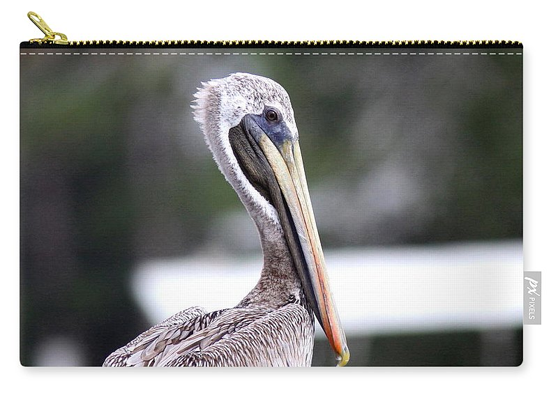 Pelican Carry-all Pouch featuring the photograph Beach Bum - Pelican by Travis Truelove