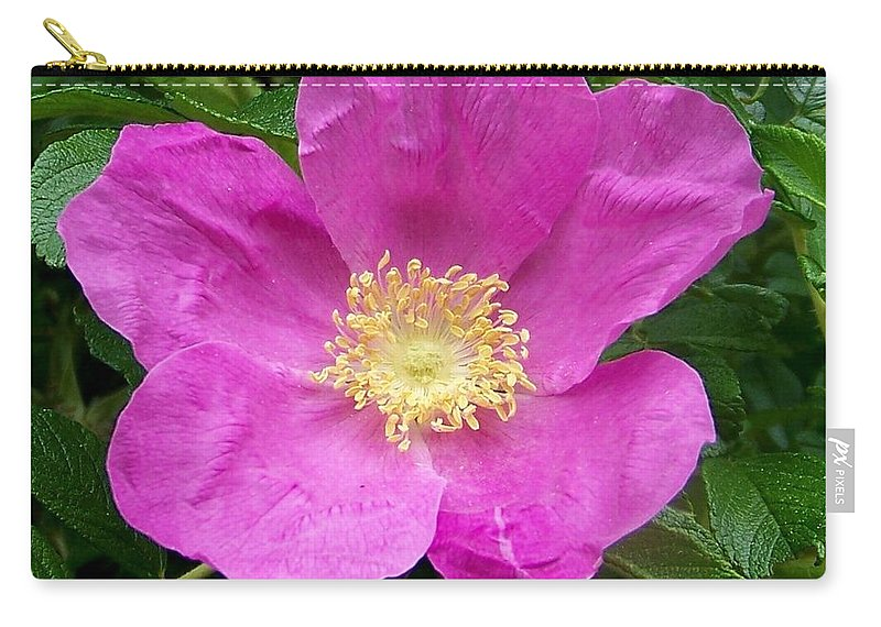Green Carry-all Pouch featuring the photograph Pink Beach Rose Fully In Bloom by Eunice Miller