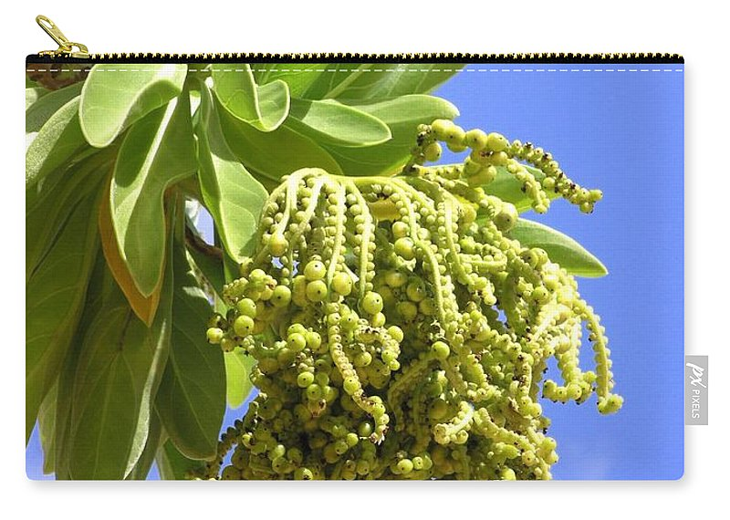 Beach Carry-all Pouch featuring the photograph Beach Tree Seed Pods by Mary Deal