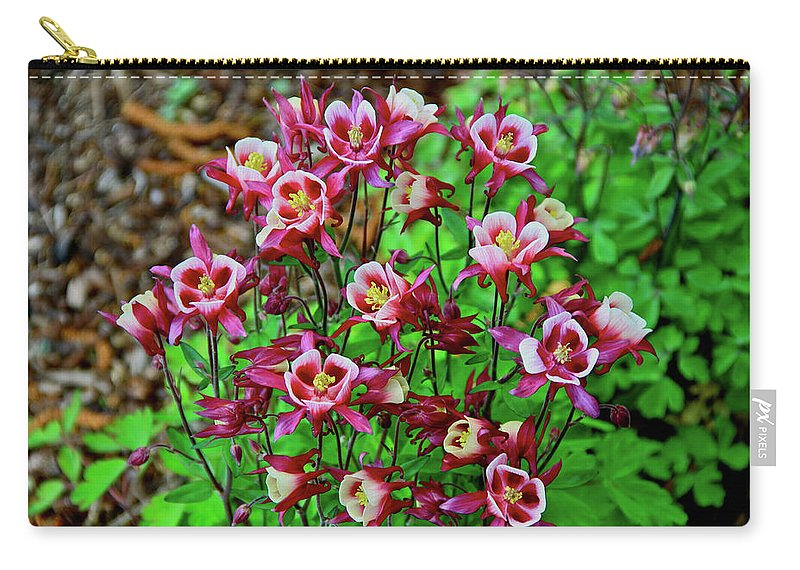 Columbine Carry-all Pouch featuring the photograph Beautiful Columbine  by Ed Riche