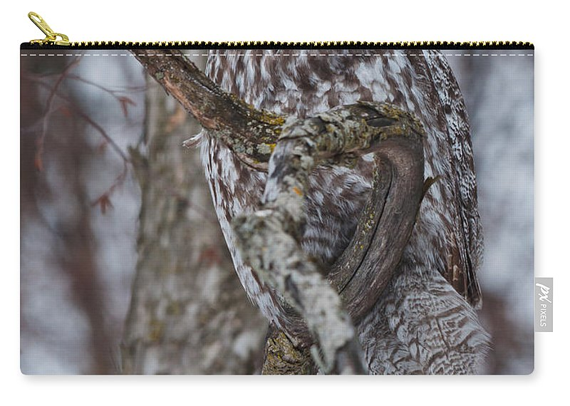 Carry-all Pouch featuring the photograph Beautiful Great Gray by Cheryl Baxter