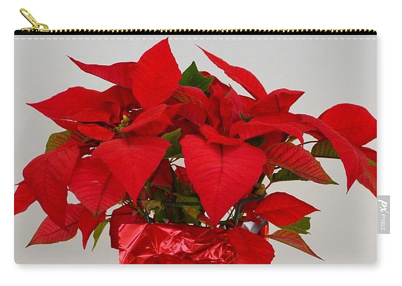 Poinsettia.mexico Carry-all Pouch featuring the photograph Beautiful Poinsettia Plant - No 2 by Mary Deal