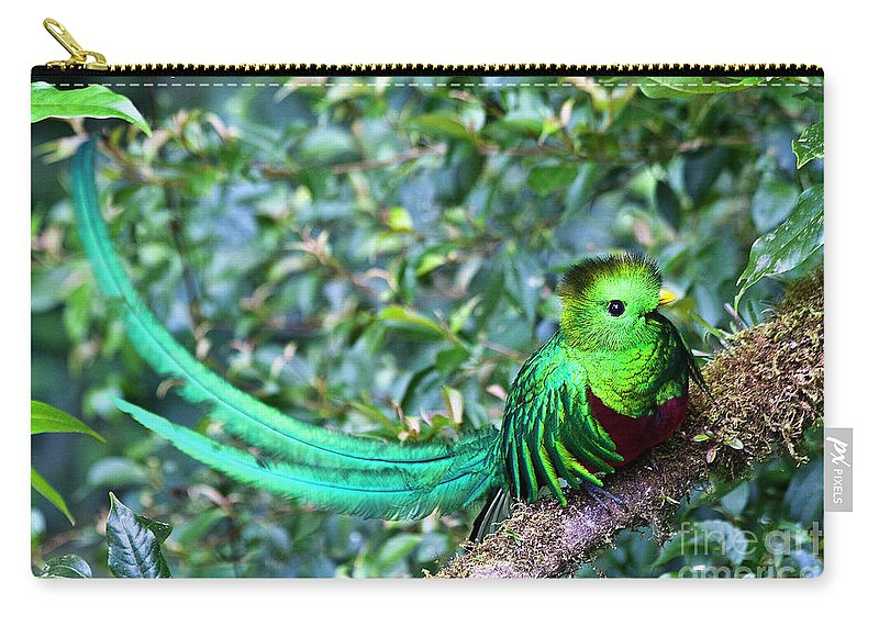 Bird Carry-all Pouch featuring the photograph Beautiful Quetzal 3 by Heiko Koehrer-Wagner