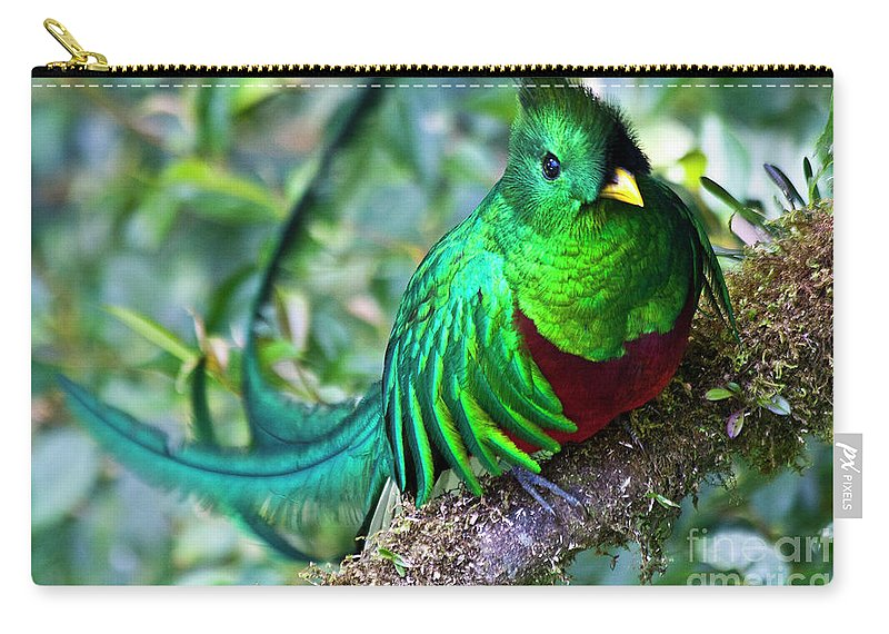 Quetzal Carry-all Pouch featuring the photograph Beautiful Quetzal 4 by Heiko Koehrer-Wagner