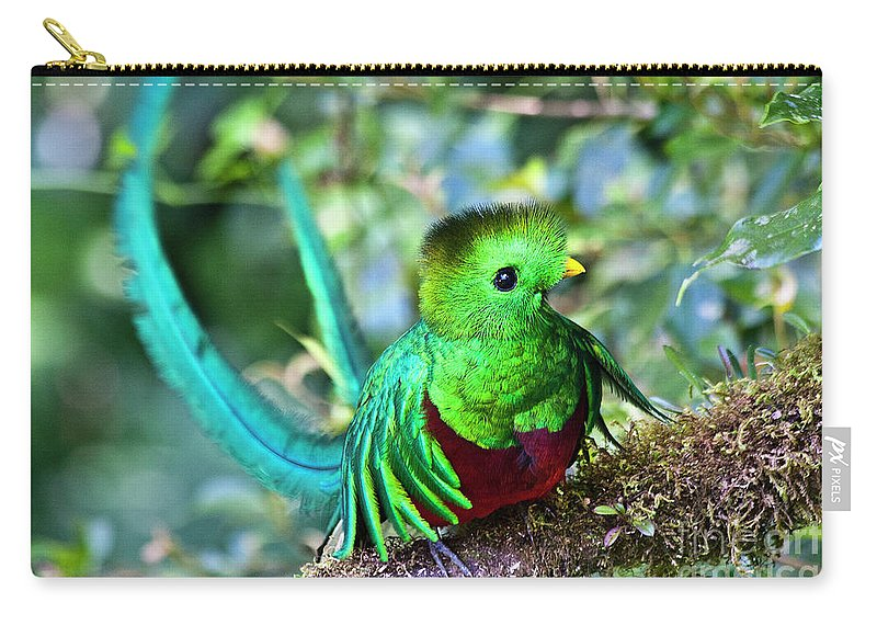 Bird Carry-all Pouch featuring the photograph Beautiful Quetzal 5 by Heiko Koehrer-Wagner