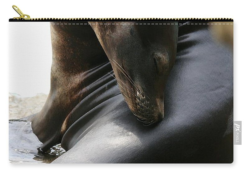 California Sea Lion Carry-all Pouch featuring the photograph Beautiful Sea Lion by Angela Rath