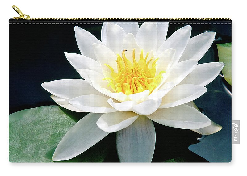 Water Lily Carry-all Pouch featuring the photograph Beautiful Water Lily Capture by Ed Riche