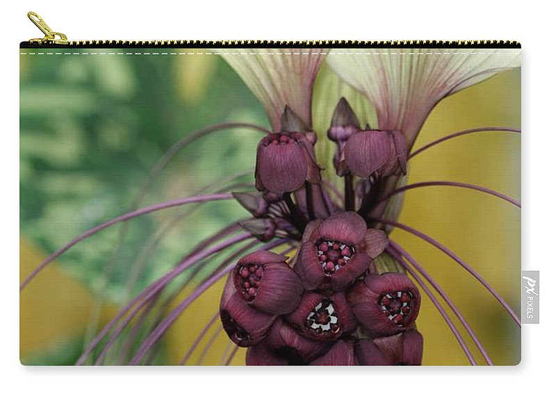 Beautiful white bat flower carry all pouch for sale by sabrina l ryan flower carry all pouch featuring the photograph beautiful white bat flower by sabrina l ryan mightylinksfo