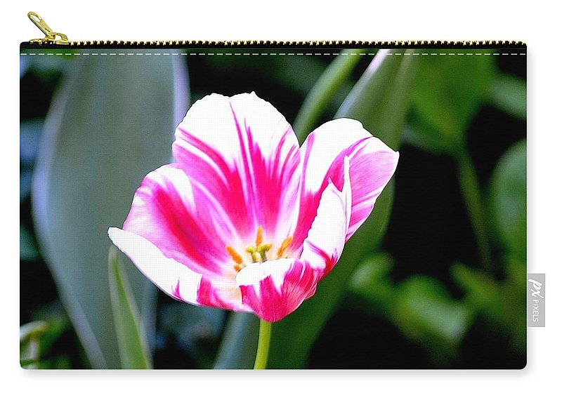 Beauty Carry-all Pouch featuring the photograph Beauty by Tara Potts