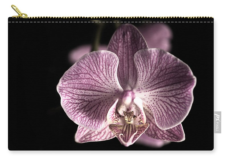 Beautiful; Beauty; Black; Bloom; Blossom; Botany; Branch; Bud; Closeup; Colorful; Colors; Colours; Dark; Decorative; Elegant; Exotic; Flora; Floral; Flower; Image; Isolated; Life; Natural; Nature; Object; Orchid; Petal; Phalaenopsis; Photo; Pink; Plant; Pretty; Red; Space; Stem; Studio; White Carry-all Pouch featuring the photograph Beauty by U Schade
