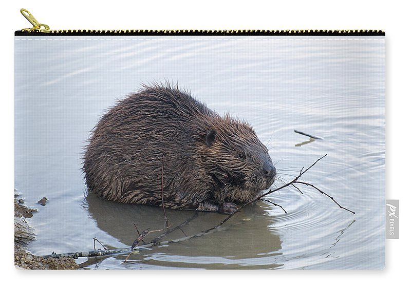 Beaver Carry-all Pouch featuring the photograph Beaver Chewing On Twig by Chris Flees