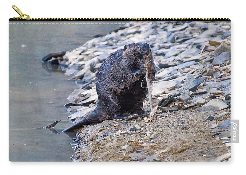 Beaver Carry-all Pouch featuring the photograph Beaver Sharpens Stick by Chris Flees