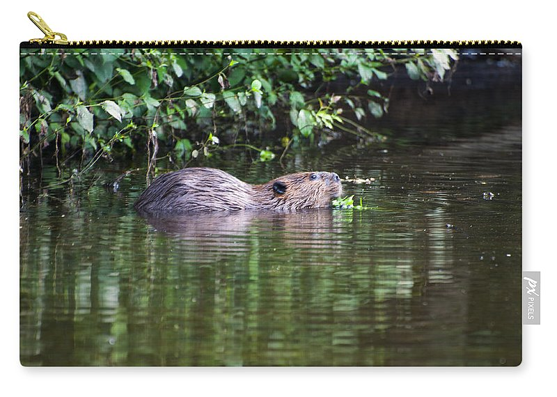 Beaver Carry-all Pouch featuring the photograph beaver swims in NC lake by Chris Flees