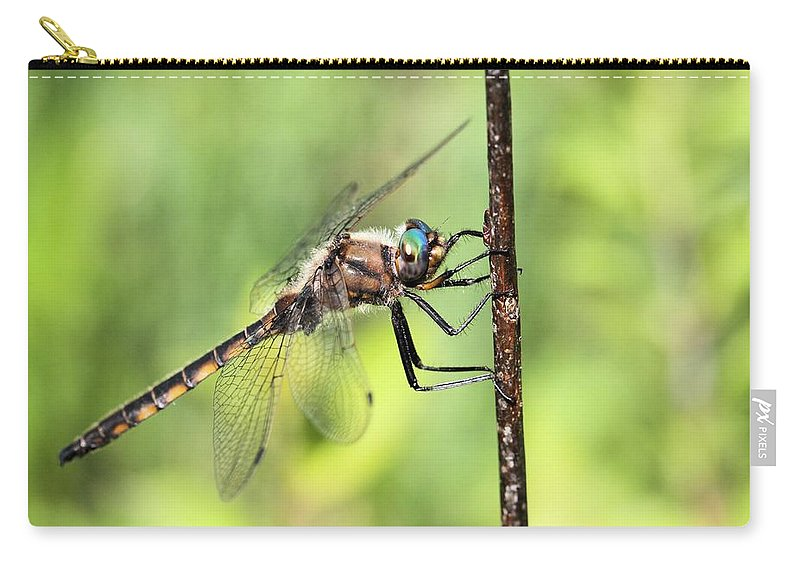 Beaverpond Baskettail Dragonfly Carry-all Pouch featuring the photograph Beaverpond Baskettail Dragonfly by Doris Potter