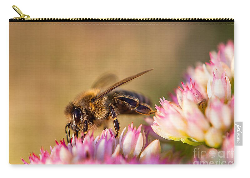 Animal Carry-all Pouch featuring the photograph Bee Sitting On Flower by John Wadleigh