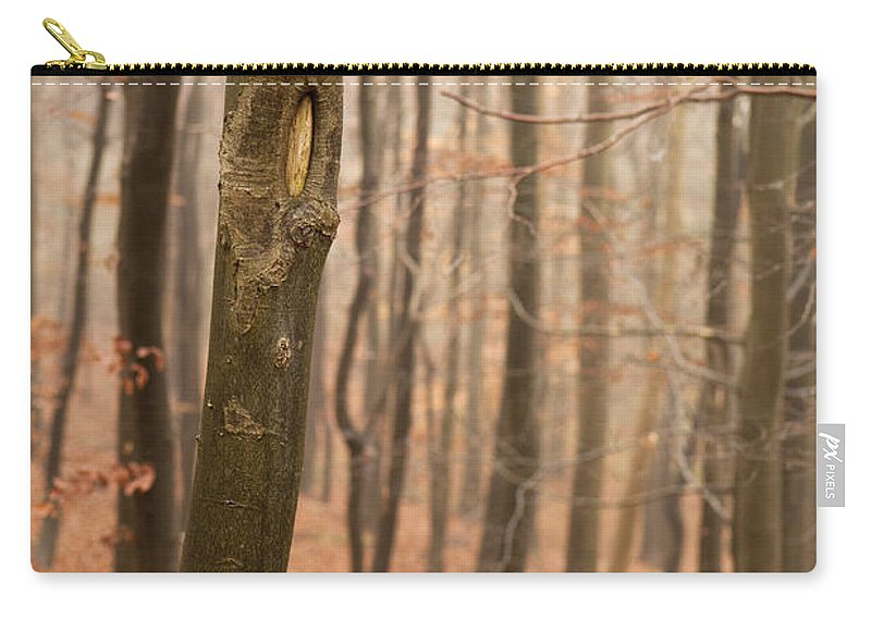 Atmospheric Carry-all Pouch featuring the photograph Beech Wood In Autumn by Anne Gilbert