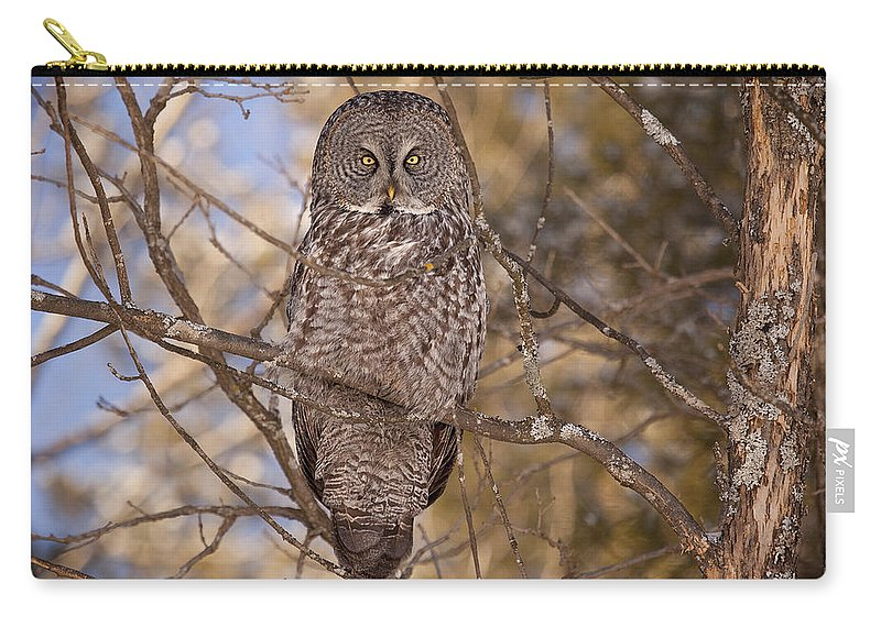 Owl Carry-all Pouch featuring the photograph Being Observed by Eunice Gibb