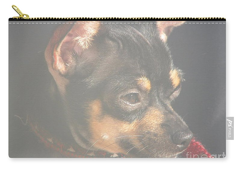 Art For The Wall...patzer Photography.chihuahua Carry-all Pouch featuring the photograph Bella by Greg Patzer