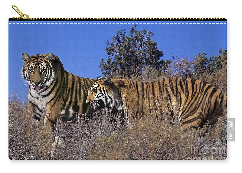 Bengal Tigers Carry-all Pouch featuring the photograph Bengal Tigers On A Grassy Hillside Endangered Species Wildlife Rescue by Dave Welling
