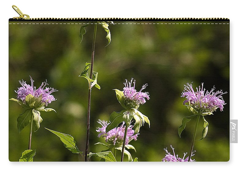 Arboretum Carry-all Pouch featuring the photograph Bergamot by Steven Ralser