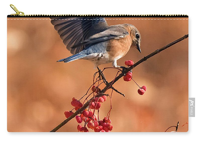 Bluebird Carry-all Pouch featuring the photograph Berry Picking Bluebird by Randall Branham