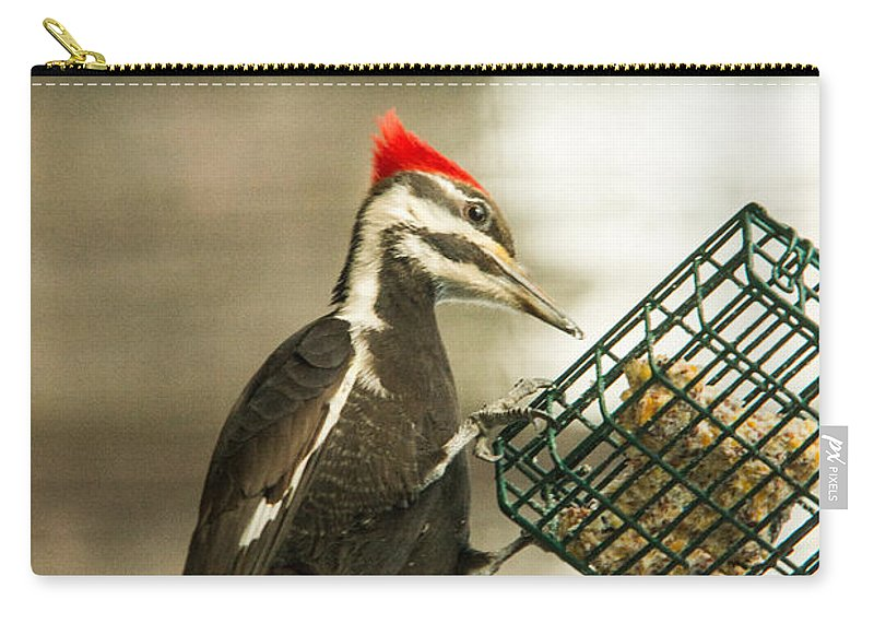 Pileated Woodpecker Carry-all Pouch featuring the photograph Better Pickins Here by Douglas Barnett