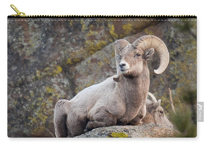 Big Horn Sheep Carry-all Pouch featuring the photograph Big Horn by Jim Fillpot