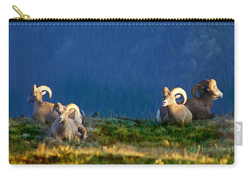 Bighorn Sheep Carry-all Pouch featuring the photograph Big Horns by Heather Coen