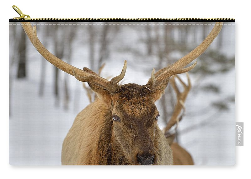Elk Carry-all Pouch featuring the photograph Big Rack by Joshua McCullough